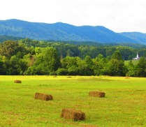 Our Hay