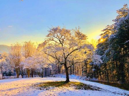 Snowfall @ The Ranch